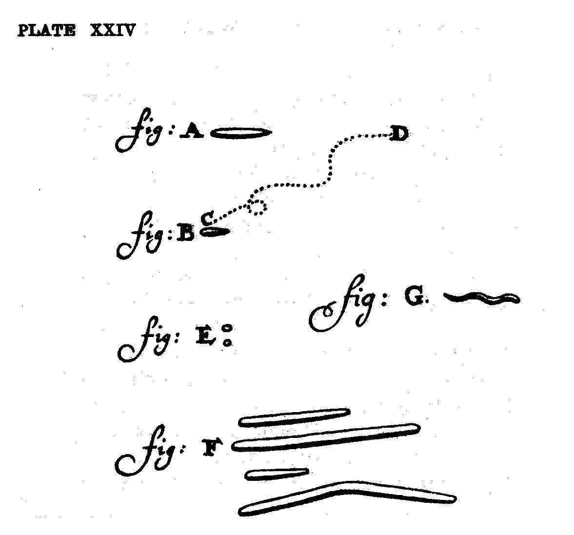 Leeuwenhoek S Microbes