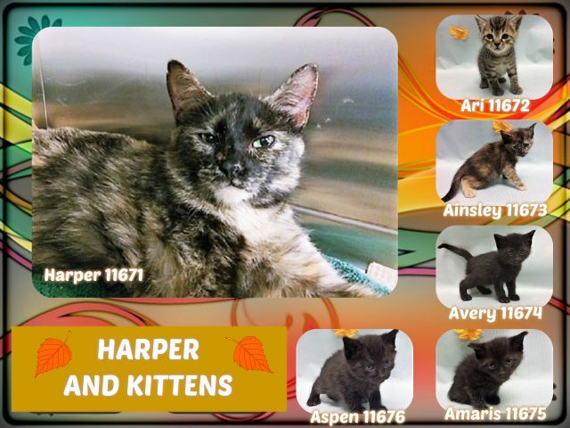 Harper And Kittens 11671 11672 11673 11674 11675 11676 Kittens Kittens Cutest Cats