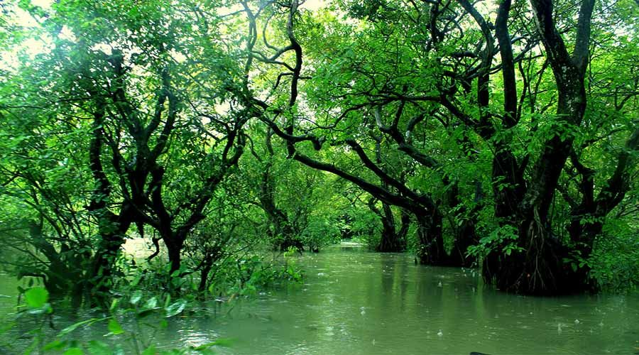 Ratargul is a fresh water swamp forest situated in Sylhet by the ...