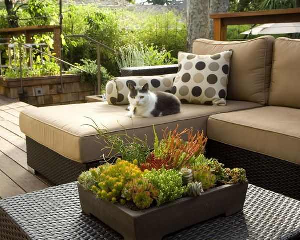 Beautiful Small Cactus Design