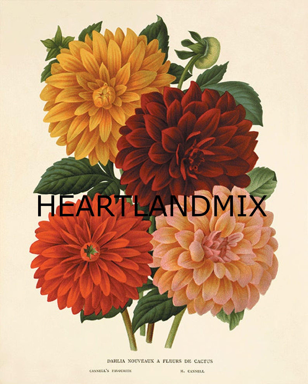 Dahlia Vintage Flower Art Print Garden Wall Art Botanical Etsy In 2020 Vintage Flower Tattoo Vintage Botanical Prints Flower Prints Art