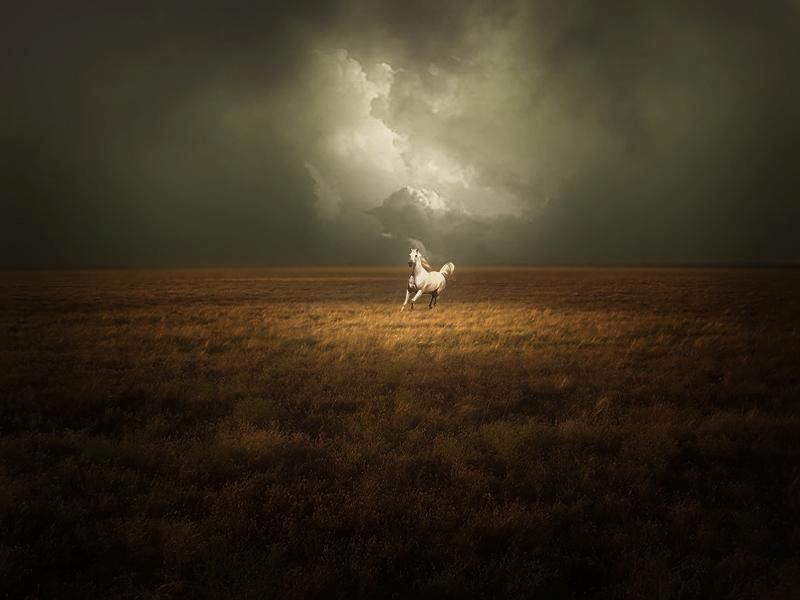 Un caballo blanco luchando por vivir