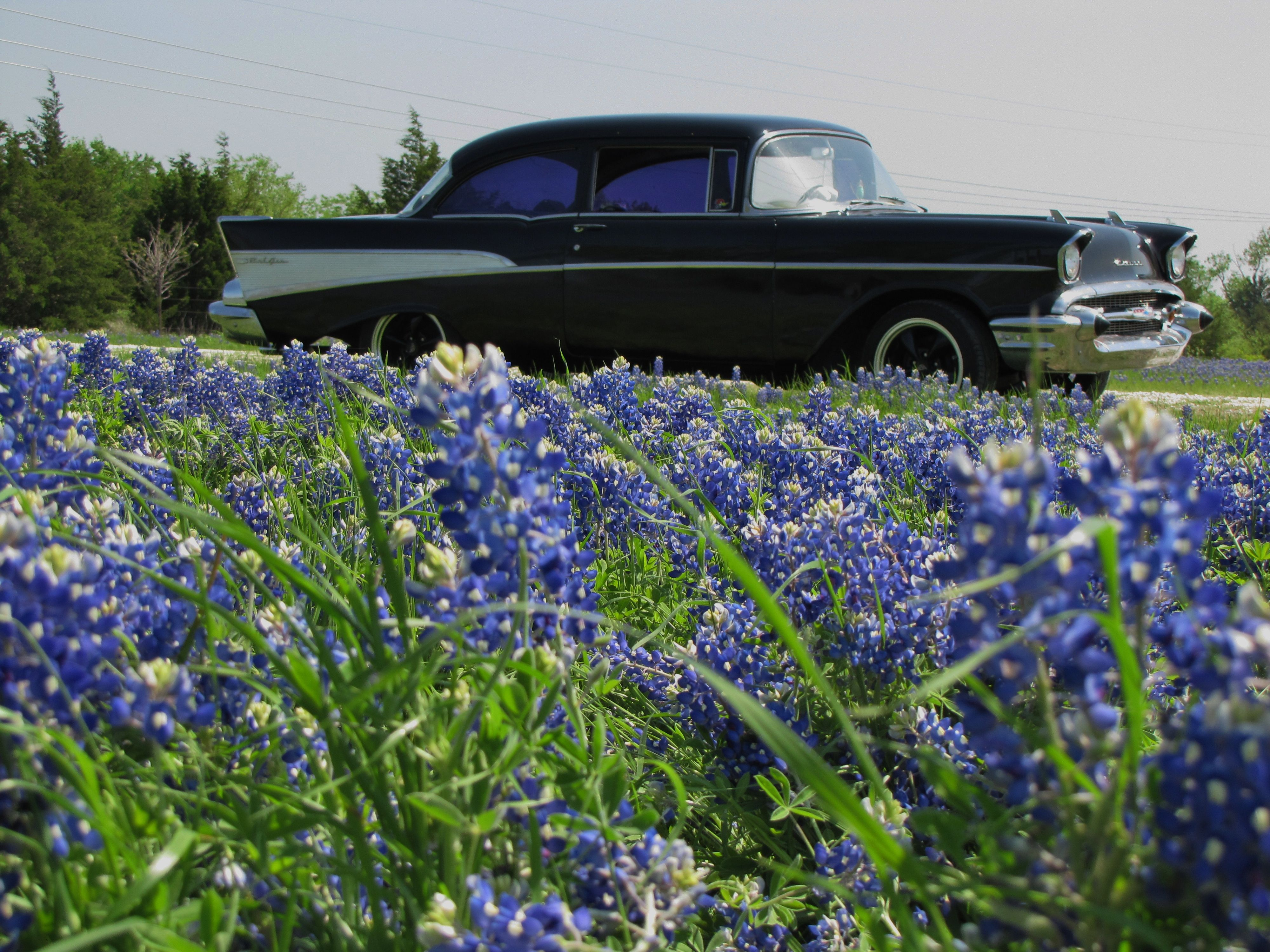 Took the '57 for a drive to the Denison Dam to see the bluebonnets.