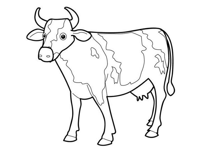 Dairy Cow Coloring Pages In 2020 Cow Coloring Pages Cow Drawing Cow Sketch