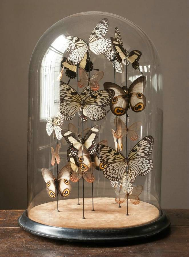 butterflies cloche glasglocke mit schmetterlingen a 1 absolutely shabby look pinterest. Black Bedroom Furniture Sets. Home Design Ideas
