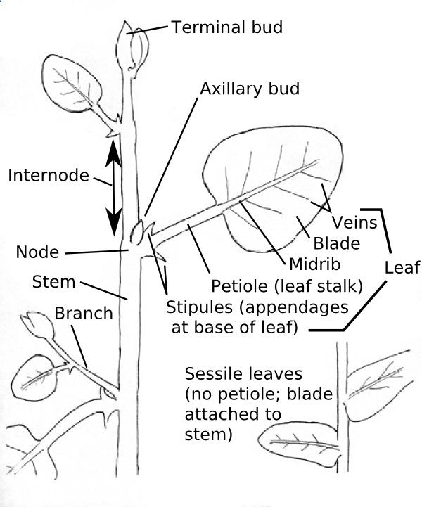 Identifying Weeds--info from the University of Virginia Extension