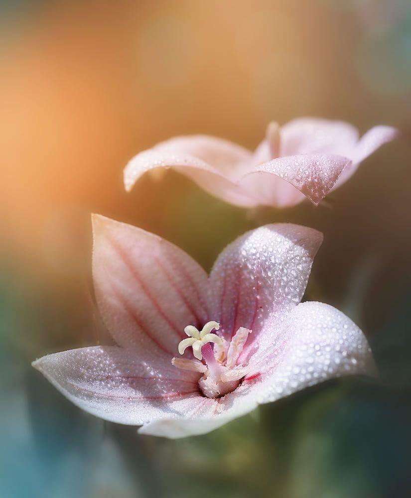 Bokeh Flowers Wedding: Open! By Sonja ️ Probst On 500px