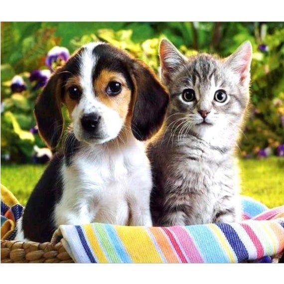 5D DIY diamond painting puppy and kitten full square/ round diamond embroidery cross stitch rhinesto
