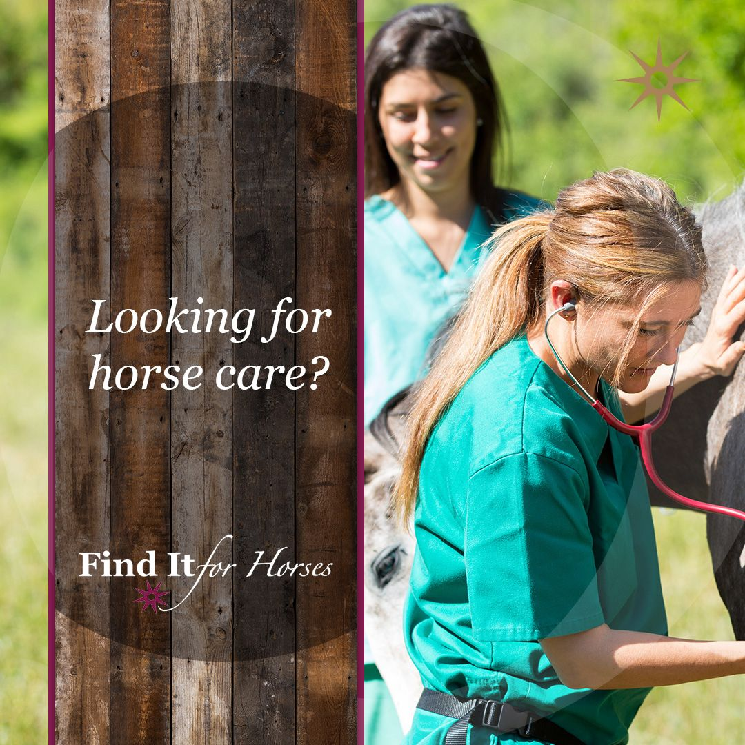 Are you in the market for horse care equine medical