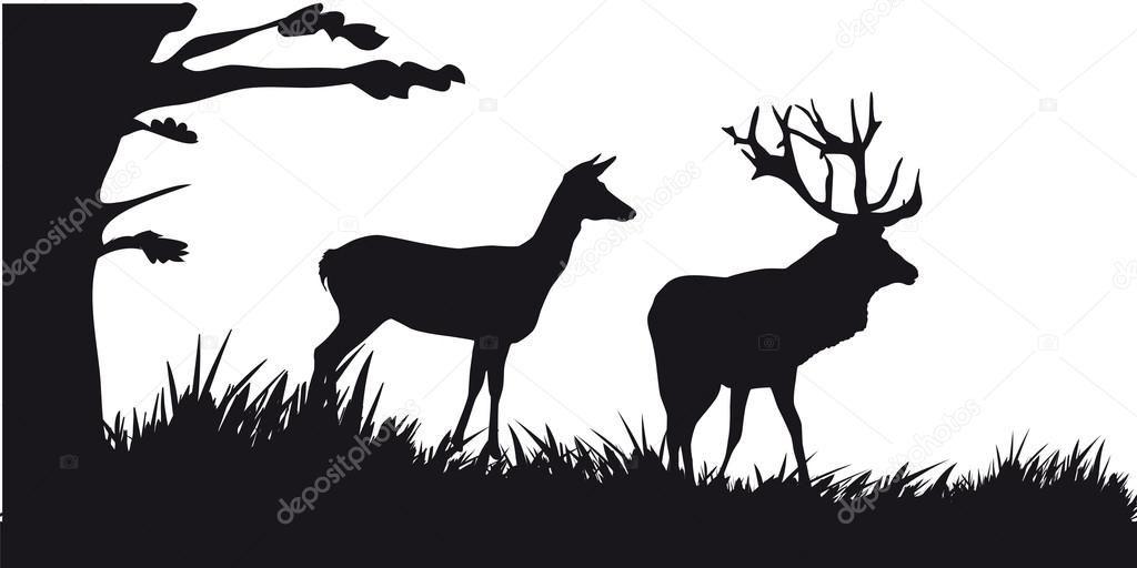 Ciervo Con Ciervos Pastando En El Bosque
