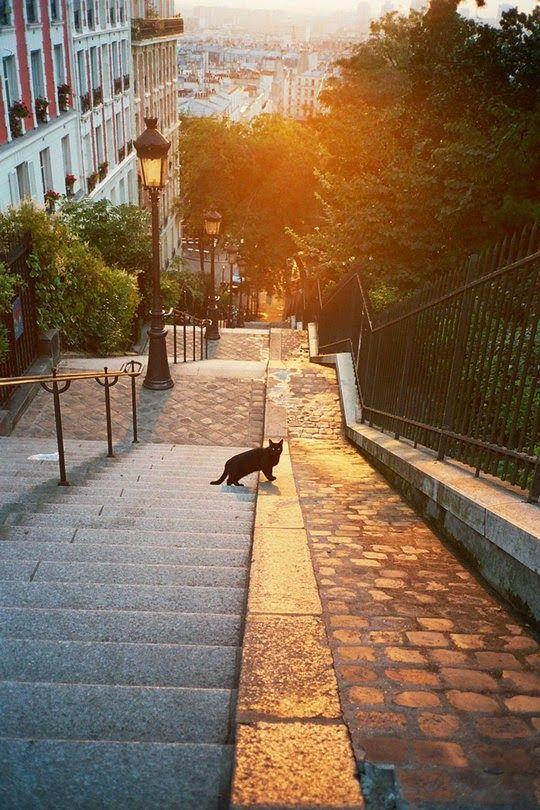 Black cat on the famous steps in Montmartre, Paris.