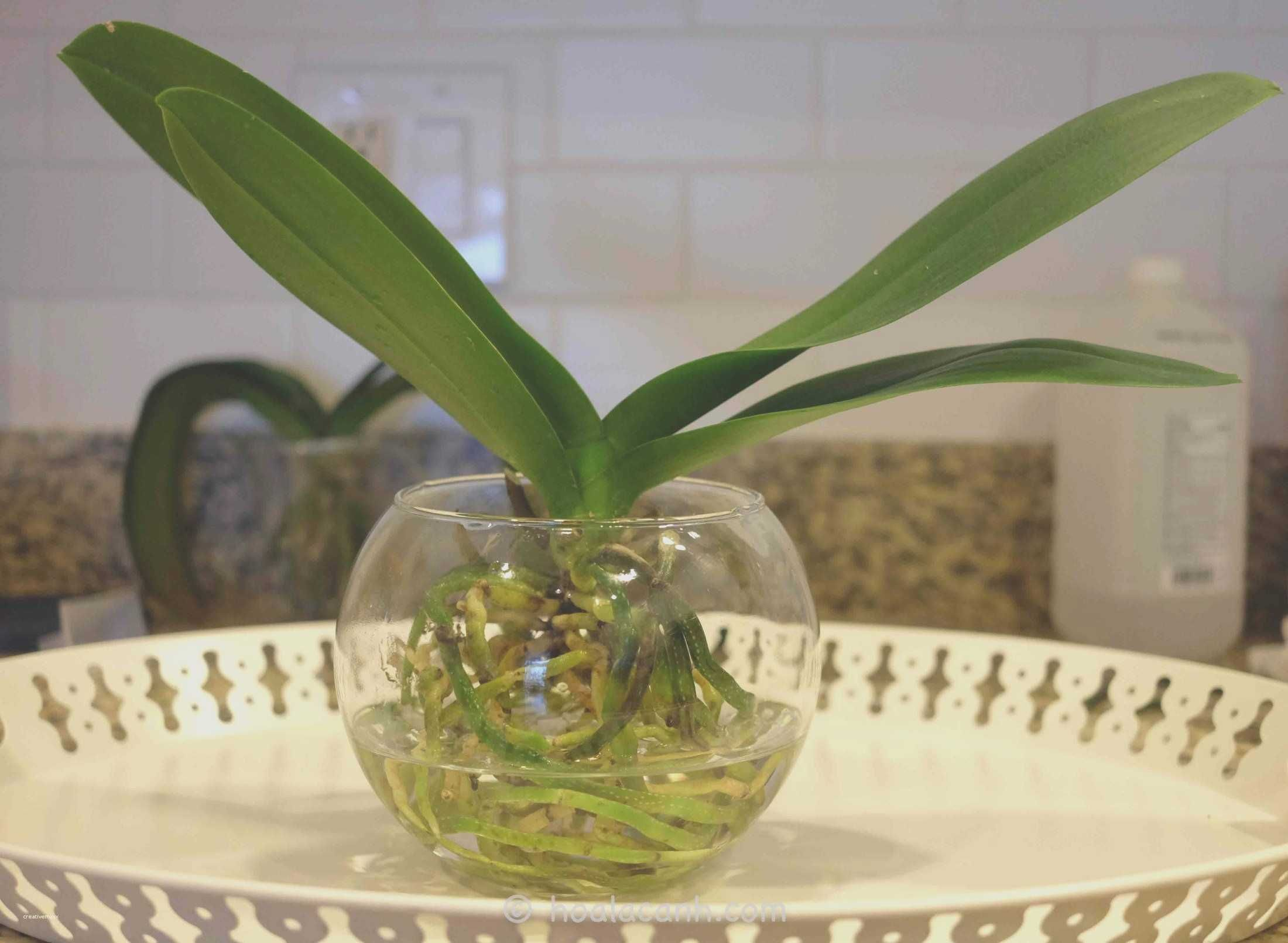 Orchid Terrarium Ideas Beautiful  Fresh Orchid Terrarium Ideas Beautiful,