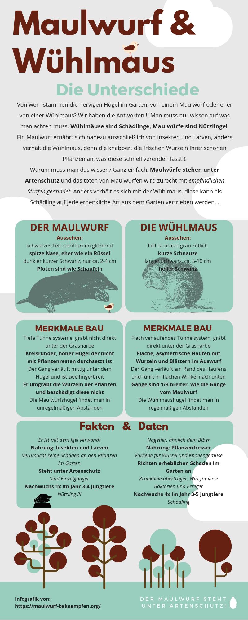 Infografik Die Unterschiede Zwischen Maulwurf Und Wuhlmaus Instandhaltungsarbeiten Checkliste Schadlingsbekampfung