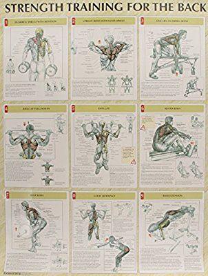 Strength Training Anatomy Poster Series 9780736059312 Medicine
