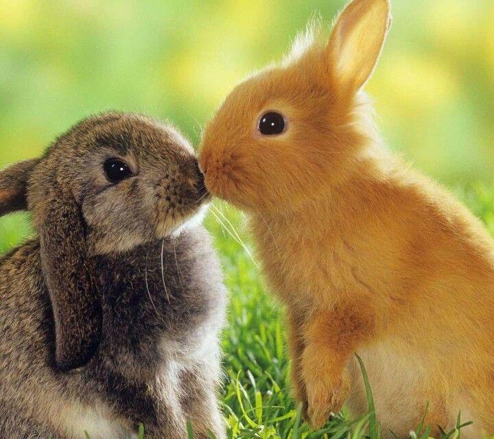 Hermoso Amor De Conejos'<3