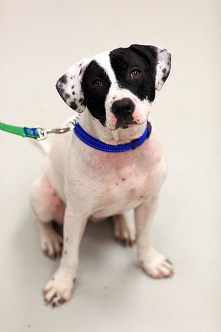 Angel Had The Worst Case Of Mange The Toronto Humane Society Had Ever Seen Look At Her Now Humane Society Dog Rocks Rescue Dogs