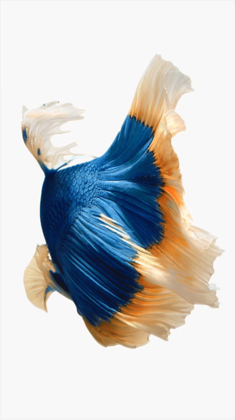 Download all of Apple's new iPhone 6s wallpapers