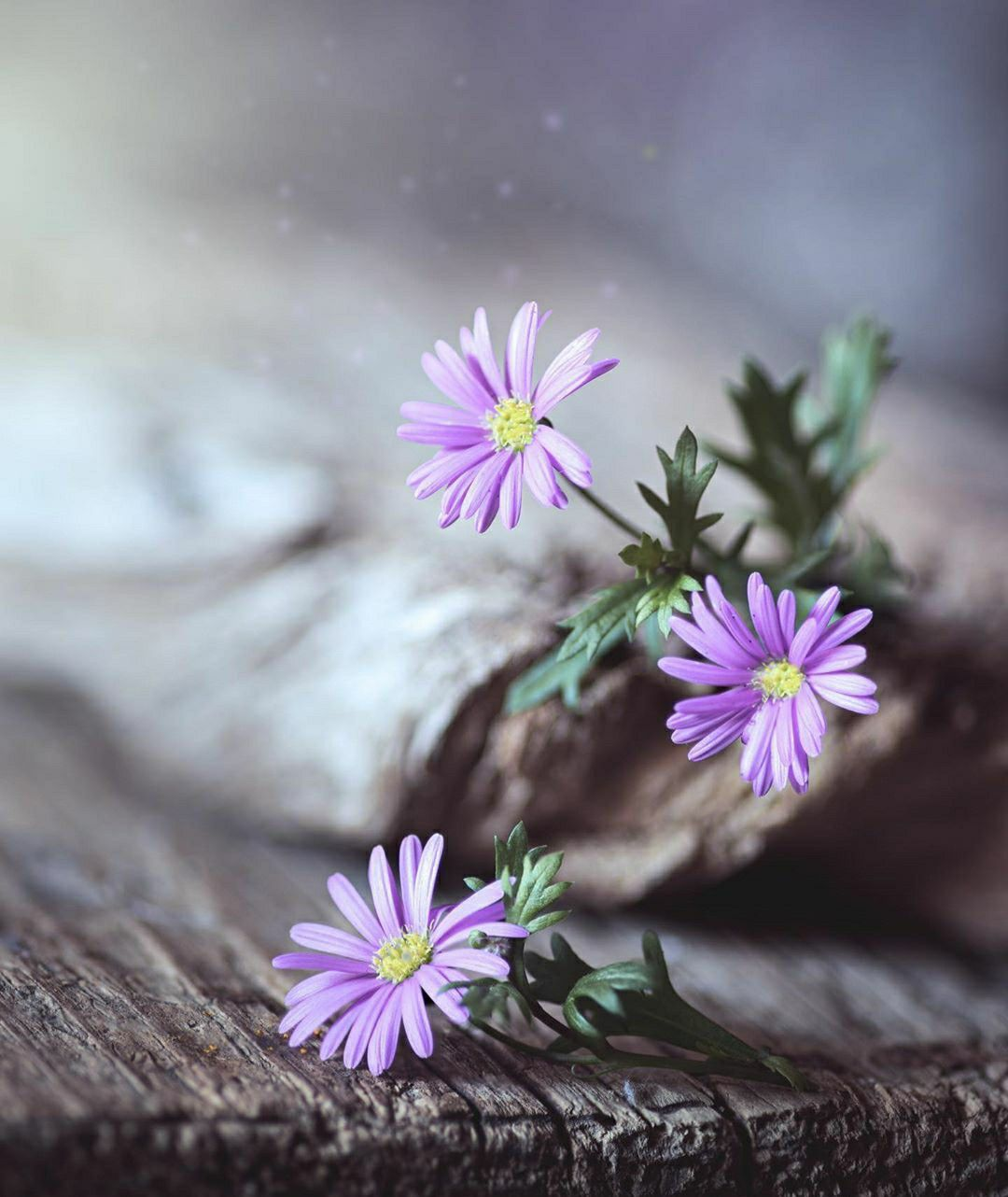 Pin By Neyra Arleth Bm On Foto In 2020 Book Flowers Beautiful Flowers Flowers