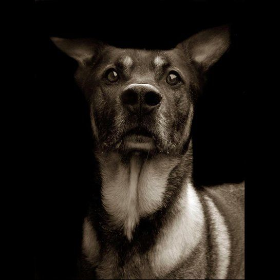 Animal Shelter Portraits Please Adopt Us This Would Be A Great Project For The Photo 2 Class Hunde Fotos Hundefotos Tiere