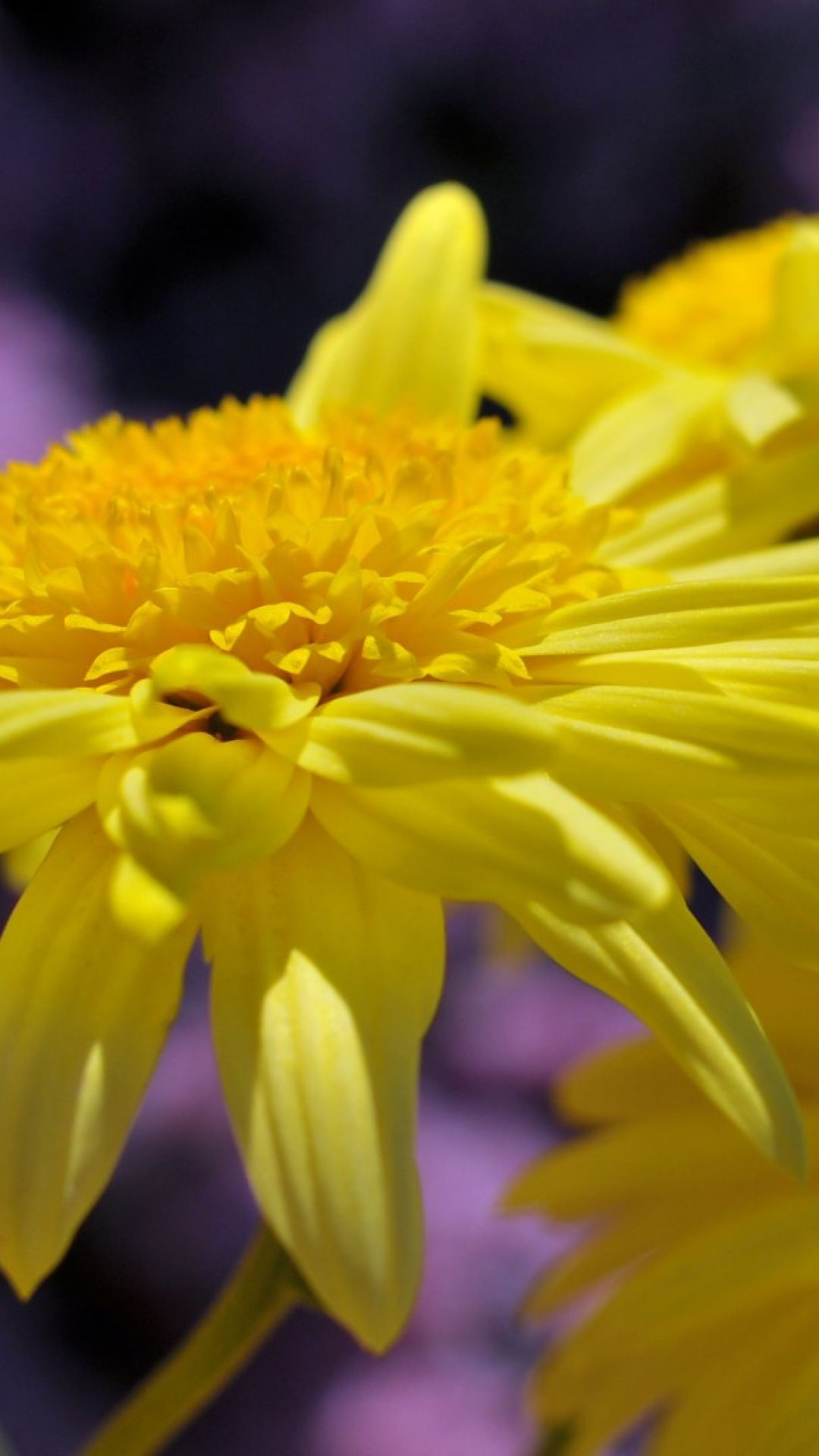 Petals flower yellow if a had a green thumb pinterest