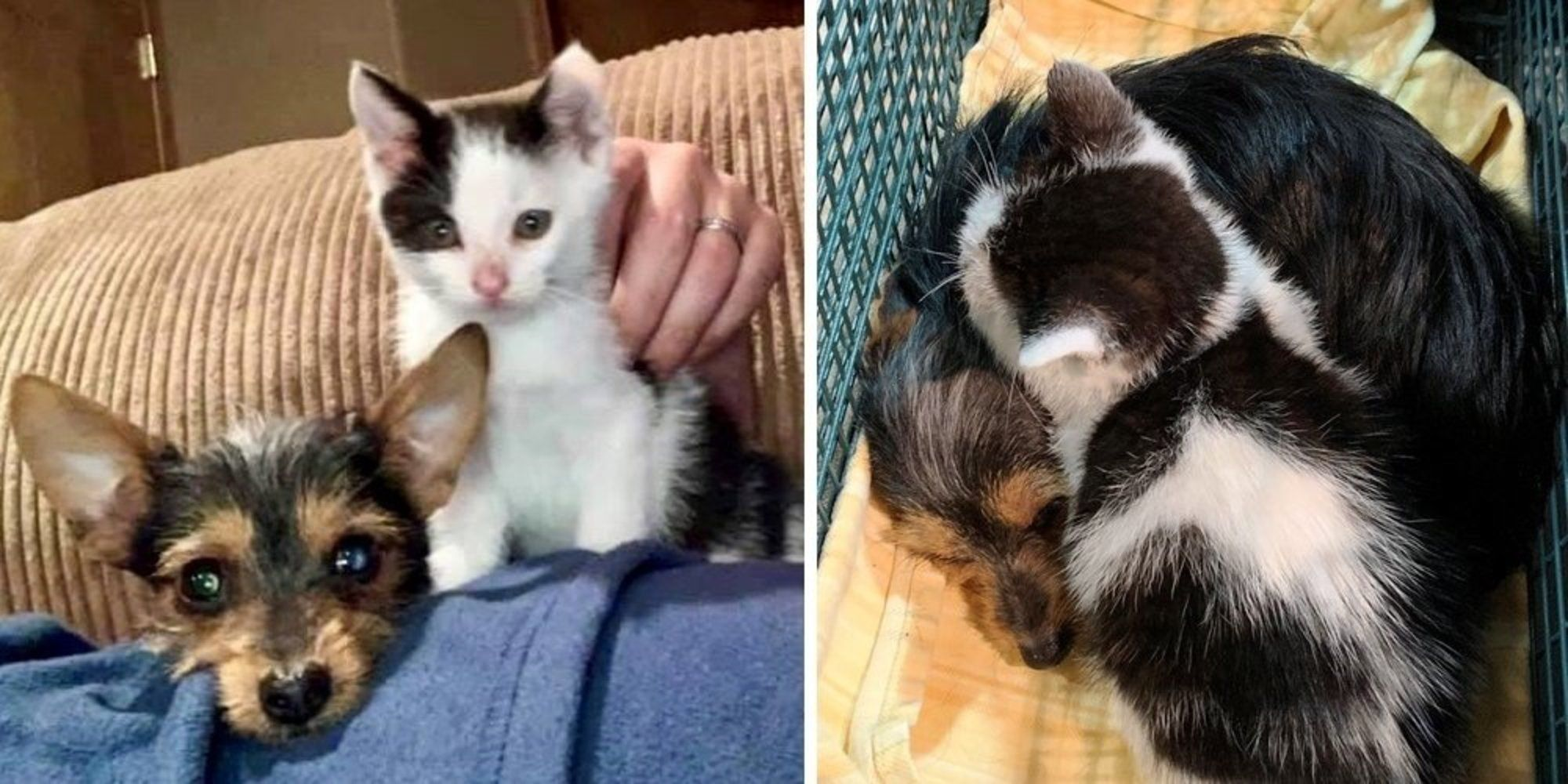 Kitten And Puppy Found Together On The Street Won T Leave Each Other S Side Love Meow Kittens And Puppies Puppy Find Puppies