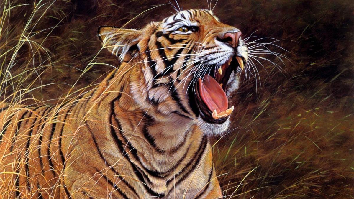 Monde de félins | Photos animaux sauvages, Animales et Peinture tigre