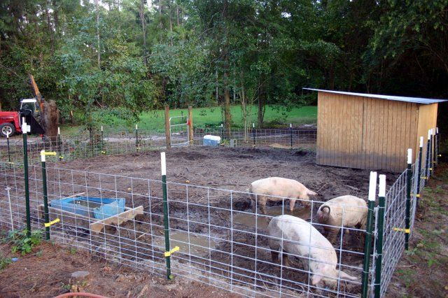 We Used 8 Hog Panels T Posts An Electric Fence A Gate And Some