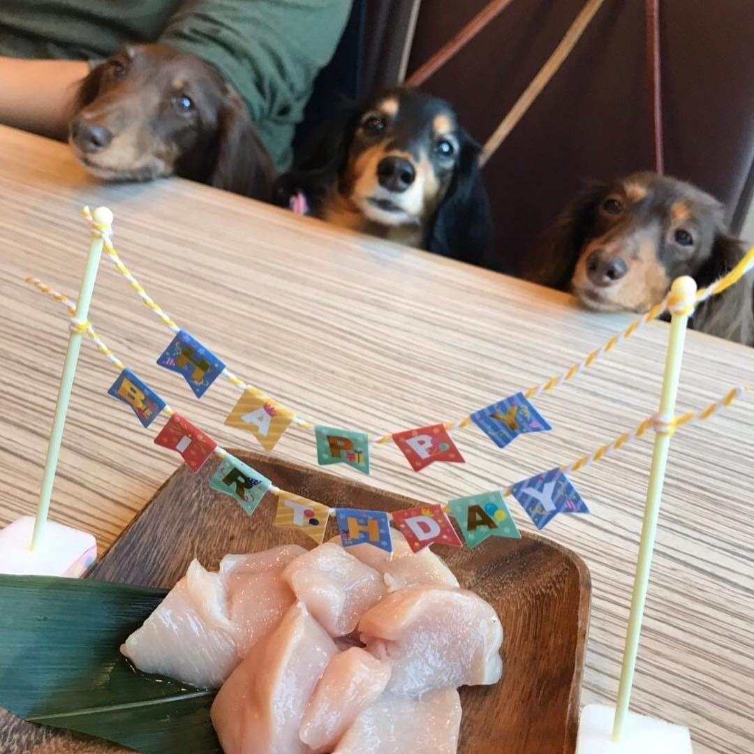 Pin by The Wooden Frog on DACHSHUNDS Dachshund