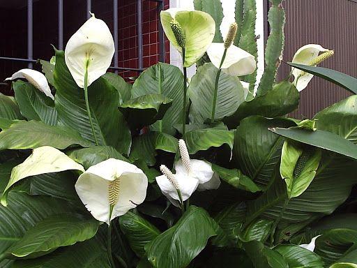 10 plantas de interior que purifican el aire remedios - Plantas de interior que purifican el aire ...