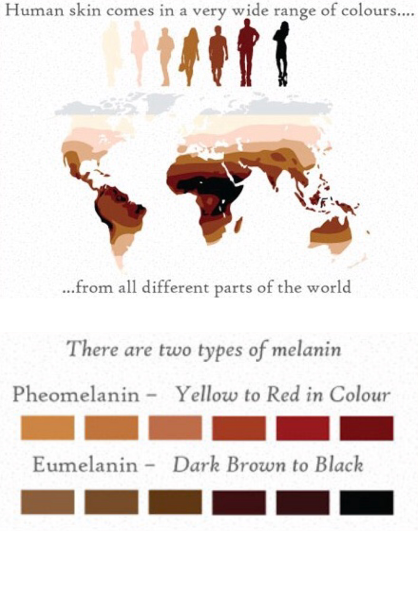 10 Important Facts And 2 Different Types Of Melanin What Is Melanin Melanin Is A Pigment That Is Made By What Is Melanin Melanin Skin Different Hair Colors