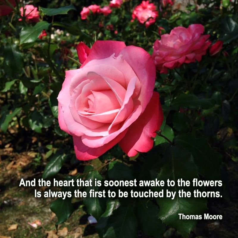 and the heart that is soonest awake to the flowers is always the rh pinterest com