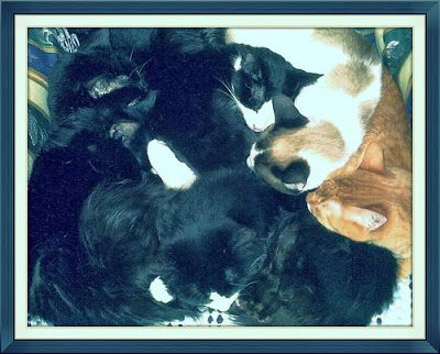 Las ventajas de tener un gato (o varios) en casa | Ayuda Felina