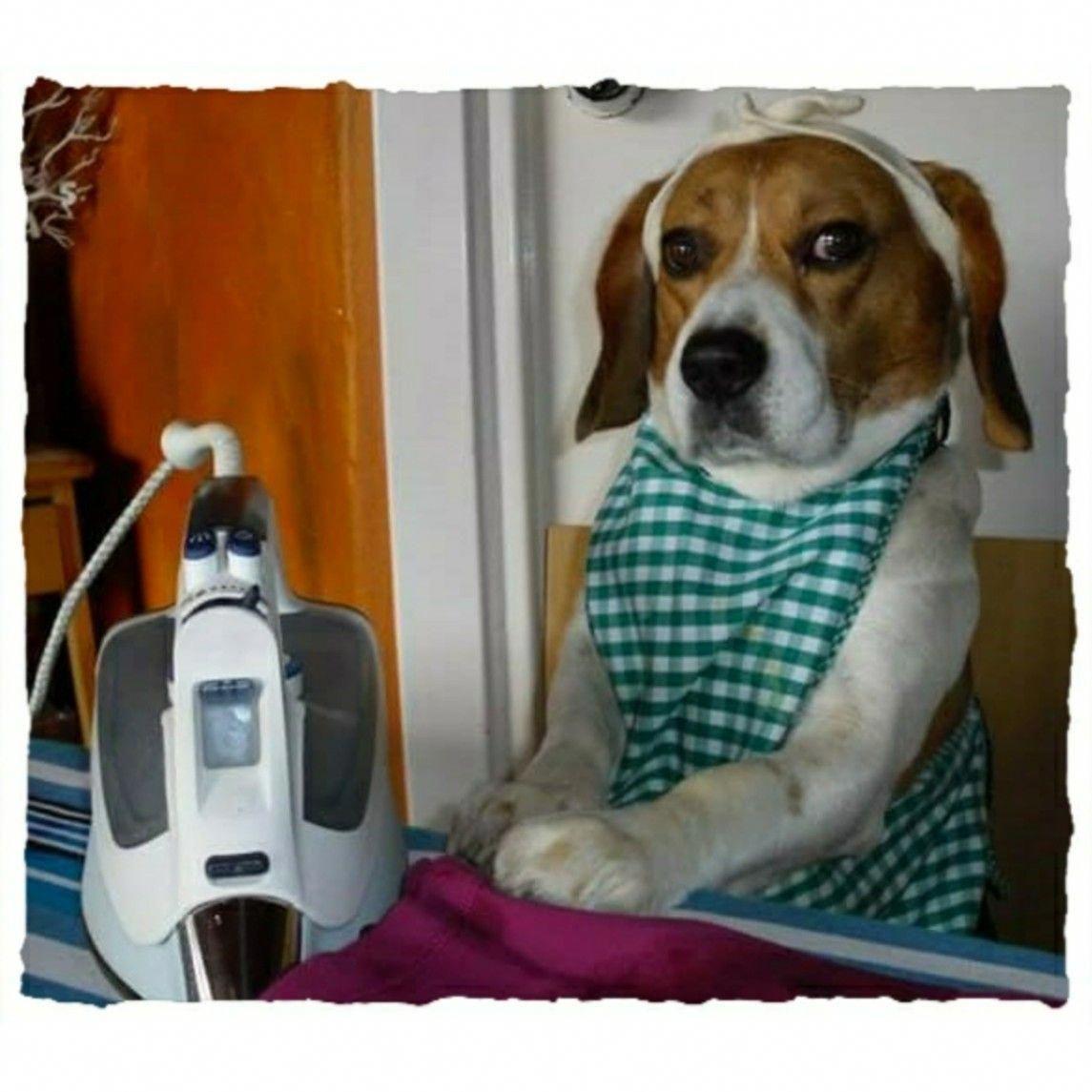 All About The Happy Beagle Puppy Health Beaglegirl