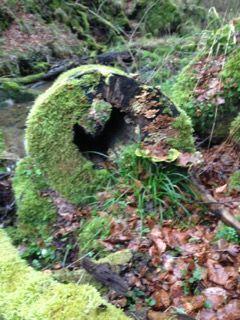 Totholz Lebensraum Mullerthaltrail Lebensraum Holz Leben