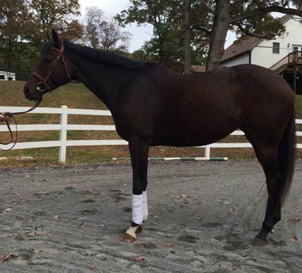 HorseID: 2019708 Kayla - PhotoID: 791444 -  2016-07-02 Days Left: 32