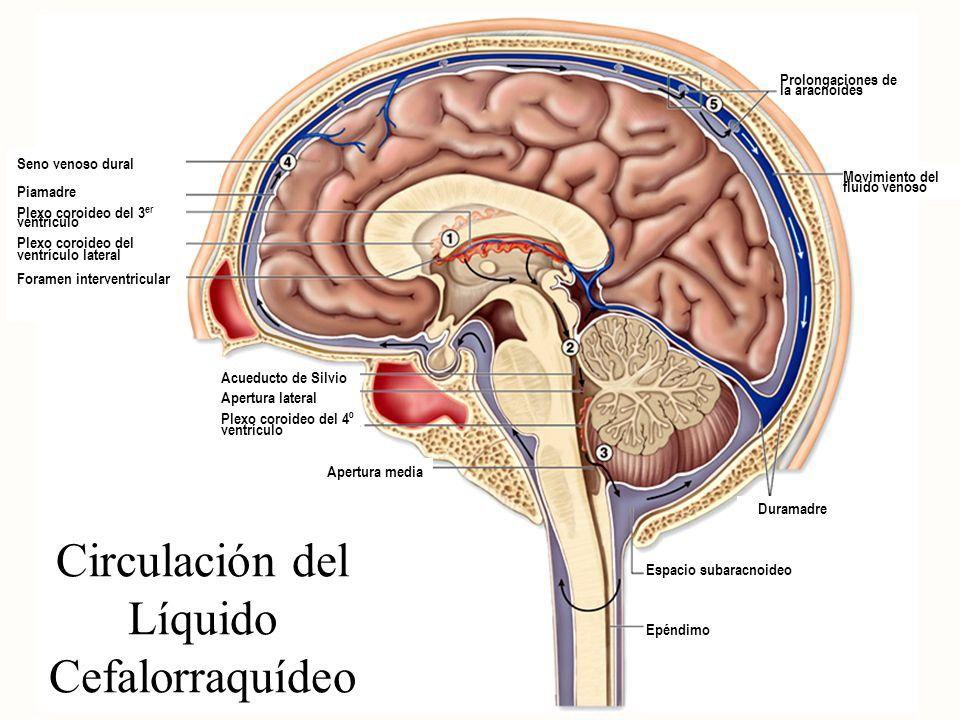 Hamer Articulos NMG Leyes Biologicas 5LB Dr. Jesus Yeo Gudino ...
