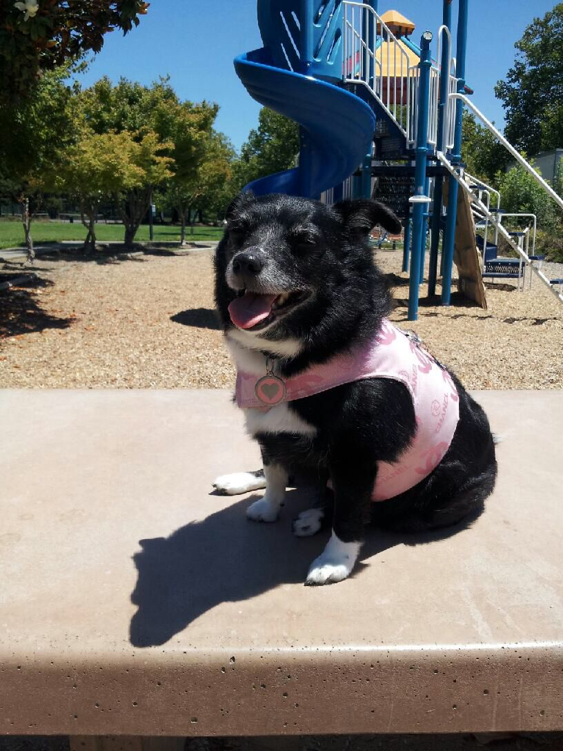 At The Park With Images Diva Dogs Little Diva Dogs