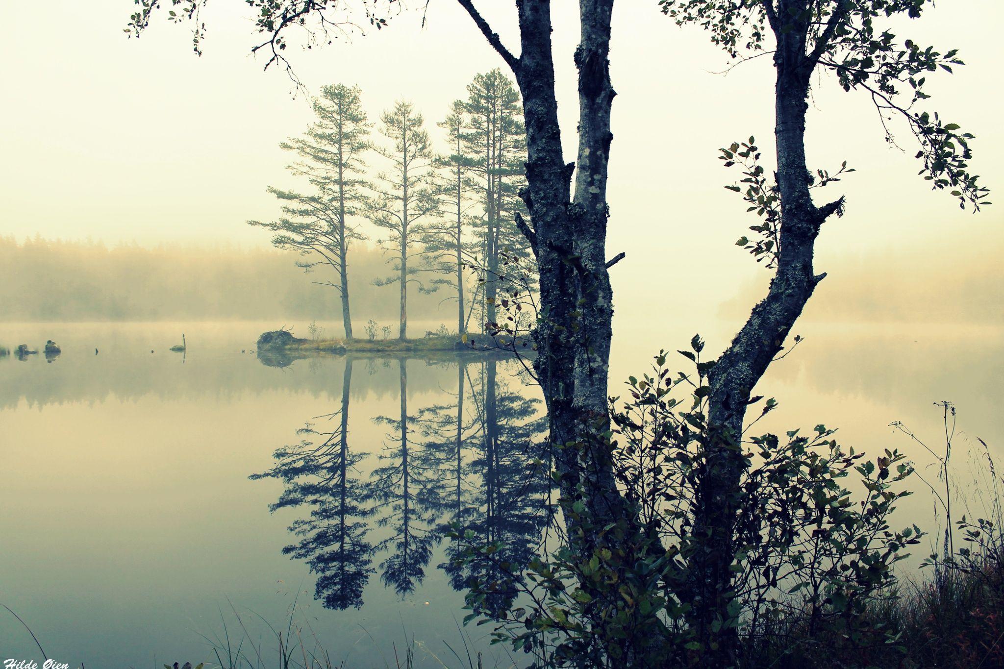 Fog by Hilde Øien on 500px