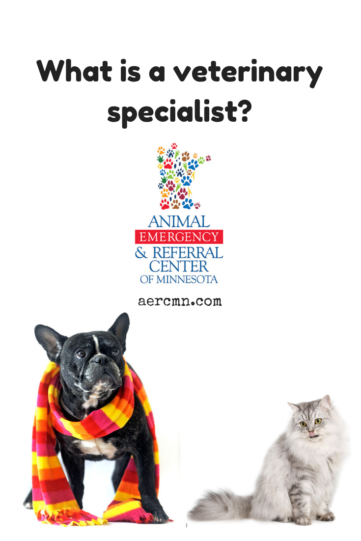 What Is a Veterinary Specialist? (With images