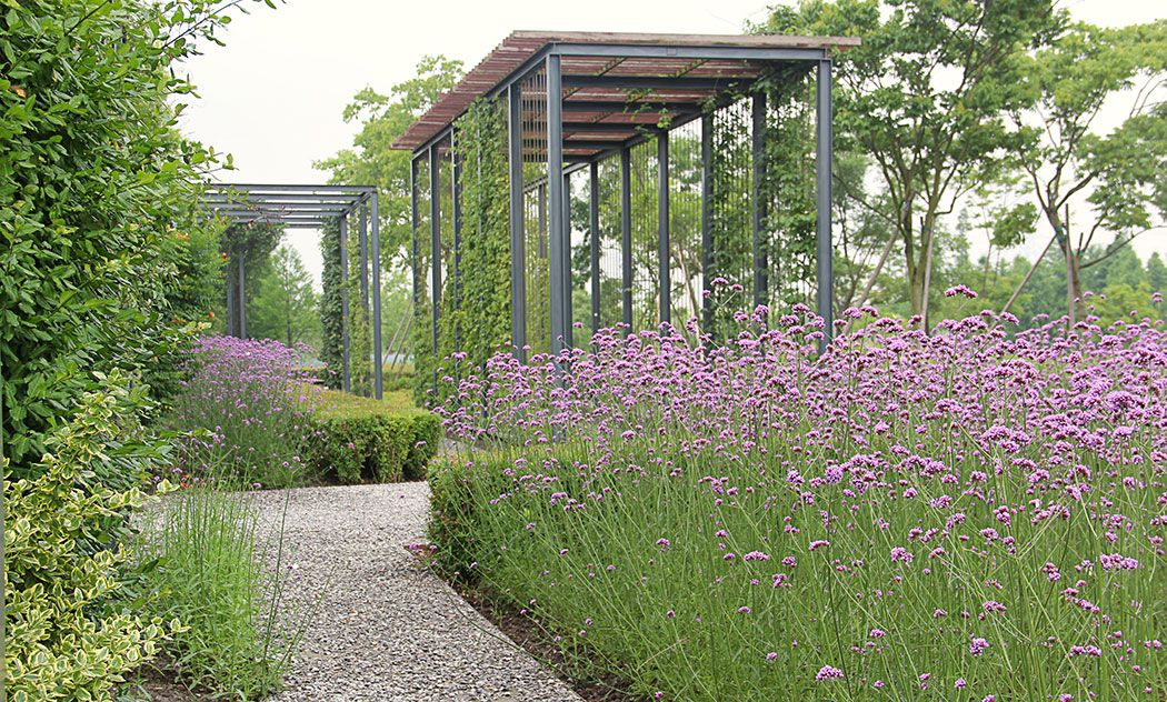 Verbena and pergola 21 climbing plants garden landscape architecture works landezine - Pergola climbing plants under natures roof ...