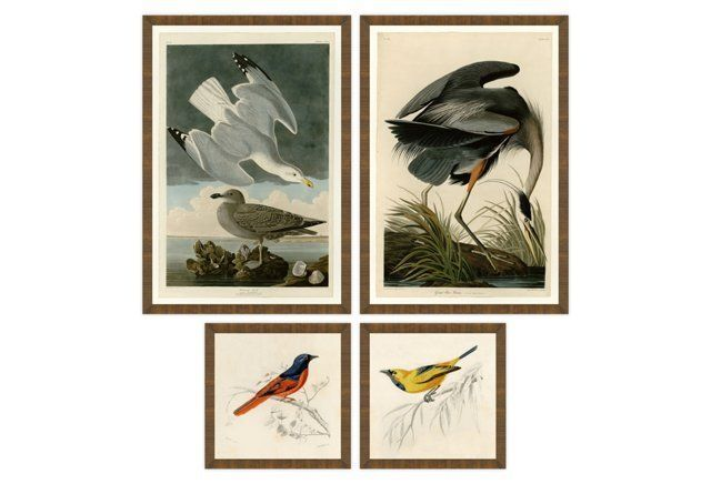 The Aviary Collection