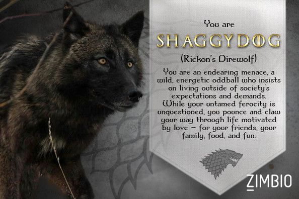 I Took Zimbio S Game Of Thrones Direwolf Quiz And I M Shaggydog
