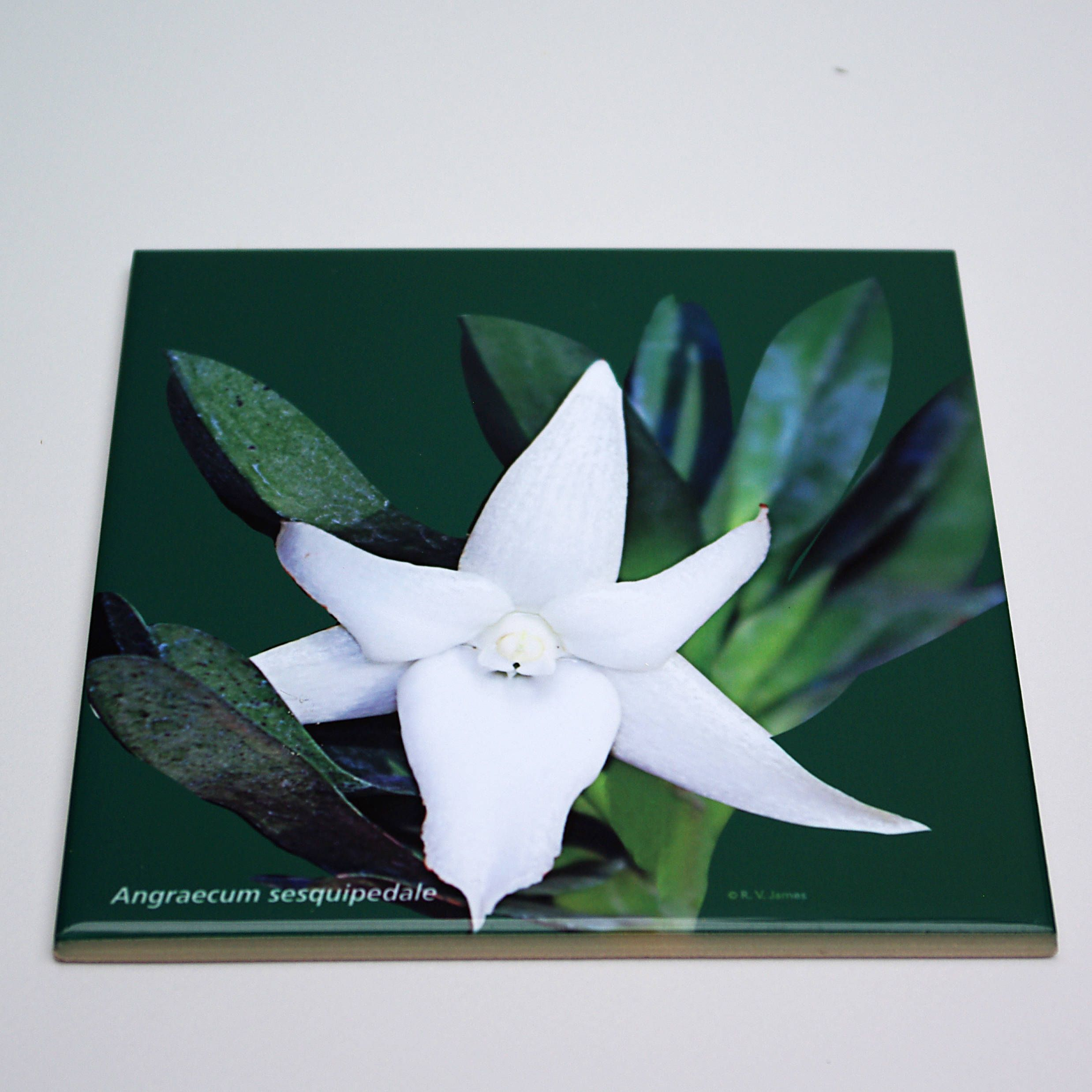 SALE Orchid ceramic tile, orchid floral trivet, IN STOCK, ready to ...