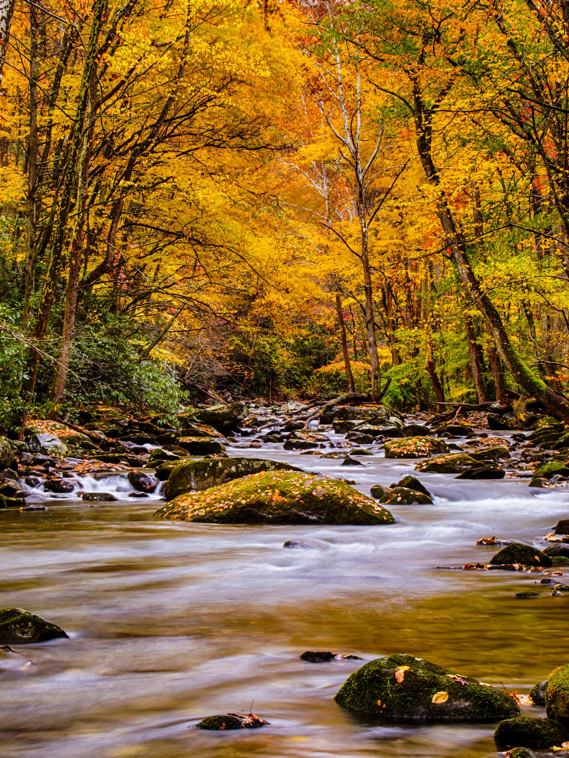 Nature Picture Of Autumn Forest In The Great Smoky Mountain National Park For Mobile Phones Wallpaper Hd Wallpapers Wallpapers Download High Resolution Wa Hd Nature Wallpapers Nature Pictures Beautiful Nature Wallpaper
