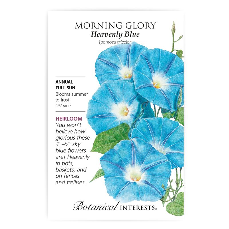 Heavenly Blue Morning Glory Seeds In 2020 Blue Morning Glory Morning Glory Seeds Morning Glory Flowers