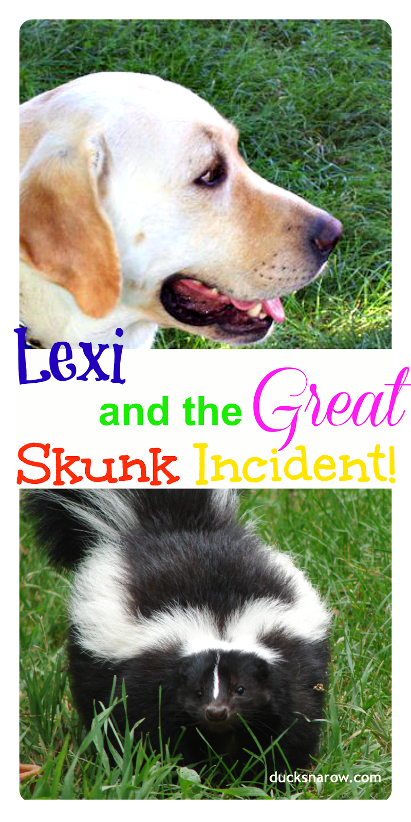 how to rid house of skunk odor