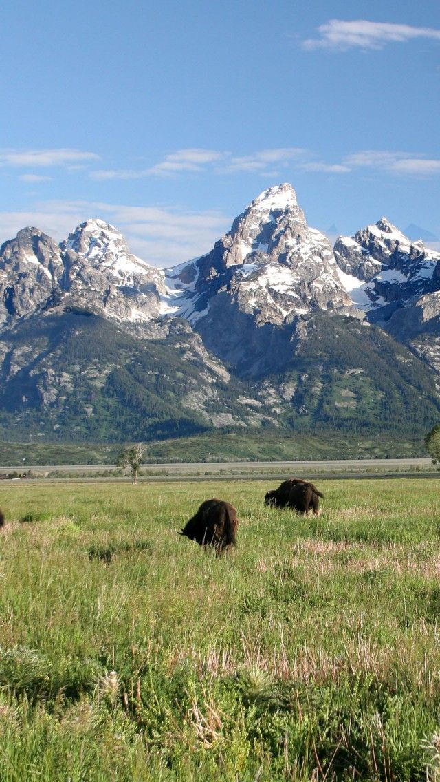 Grand Teton National Park National Parks Yellowstone National Park Teton National Park