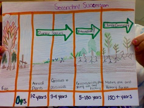Primary  secondary succession activity also science teaching rh pinterest
