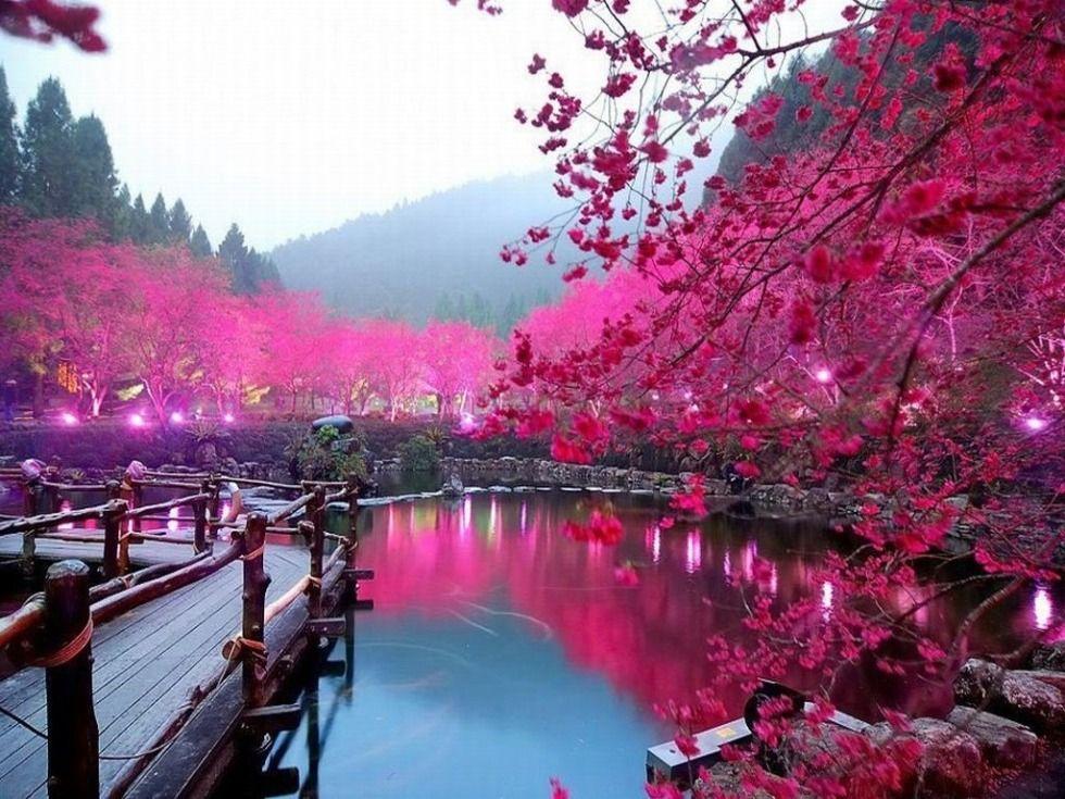 Sakura Lake Japan Cool Places To Visit Visit Japan The Good Place