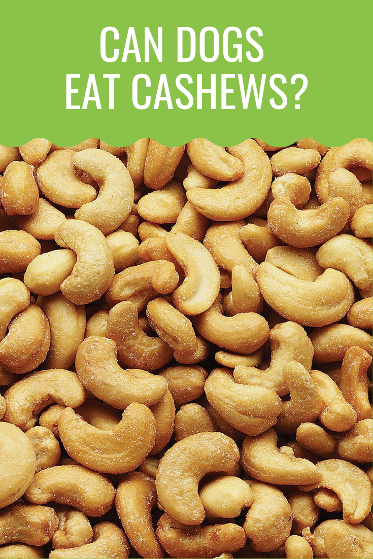 Can Dogs Eat Cashews Can dogs eat, Dog eating